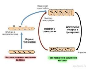 мышечная память